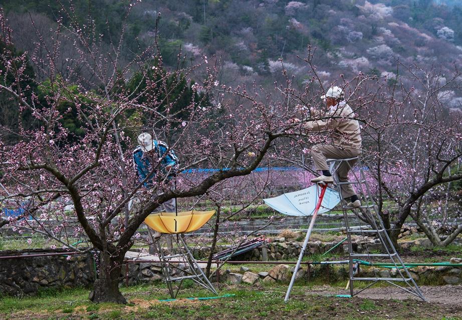 山里の農作業