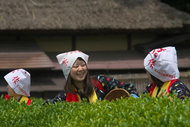 茶摘み祭りの頃